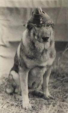 RAF Police Dog - Tarzan 1944 (Photo courtesy - Barrie Turner)